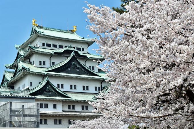 名古屋城の外観と桜